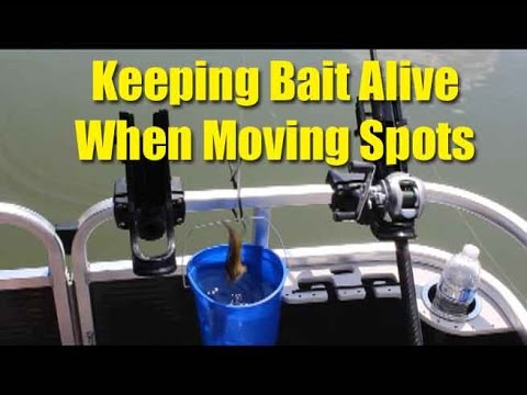 How to keep live bait alive while moving spots