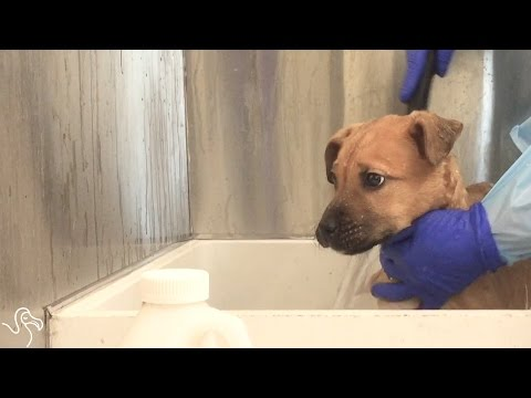 Rescue Dogs Feel Love For The First Time | The Dodo