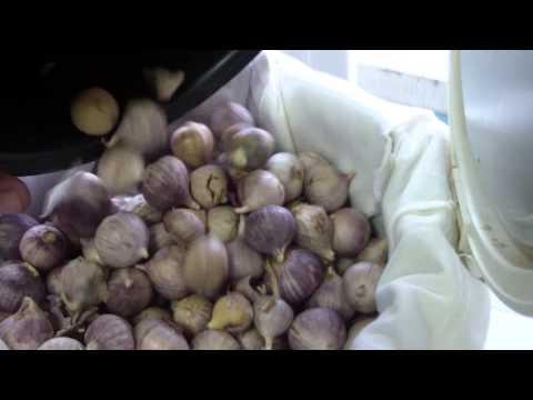 กระเทียมดำ Black Garlic Homemade