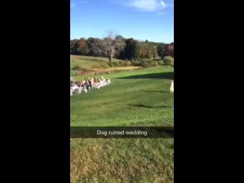 Dog ruined wedding