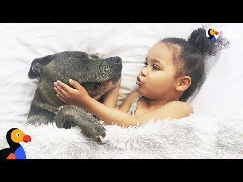 Xxx Mp4 Girls Love Their Pit Bull Dogs The Dodo 3gp Sex