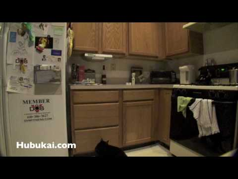 SSSCat, Training the cat to stay off the kitchen counter, funny cat video