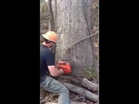 Bore cutting veneer tree