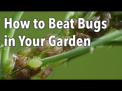 How to Beat Bugs in Your Garden