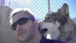 Love From Holan at Wolf Mountain Sanctuary