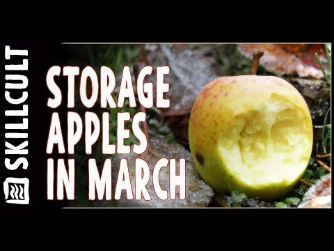 Tasting Apples in March Out of Storage, GoldRush & Pomo Sanel, Long Keepers