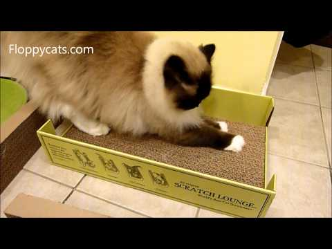 Ragdoll Cats Review The Scratch Lounge Cardboard Cat Scratcher - ラグドール - Floppycats