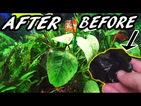 How to get rid of BLACK ALGAE FAST!
