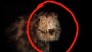 TOP 4 Real Dinosaurs Caught On Camera Alive Dinosaurs In Real Life 风行照相机恐龙活在现实生活中最常见的4恐龙实