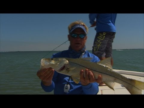 Inshore Snook and Redfish Fishing in Tampa Bay Florida