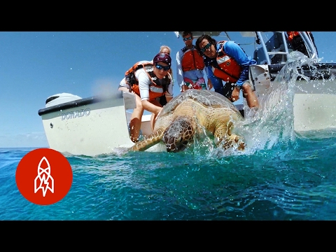Protecting the Future of Florida's Sea Turtles | That's Amazing