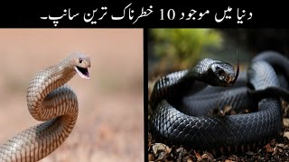 10 Most Amazing Snakes In The World Urdu | دنیا میں موجود خطرناک ترین سانپ | Haider Tv