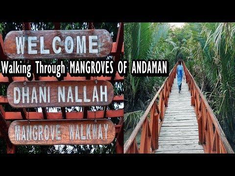 Dhani Nallah Mangrove Walkway Andaman | Betapur Mangrove Walk Way | Andaman Mangroves Forest Walk