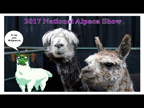 2017 National Alpaca Show in Denver, Colorado