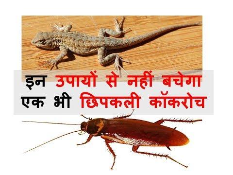 Get Rid of Cockroach Lizards Flies | Home Remedies