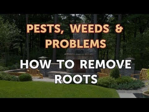 How to Remove Roots