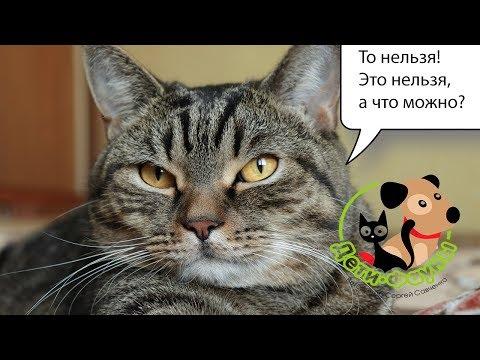 Некоторые препараты, которые не стоит применять собакам и кошкам