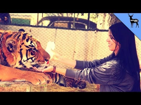 The Zoo Where People Pet Wild Animals
