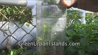 Bottle Mini Greenhouse Starting Seeds For Windows Hydroponics Or Soil