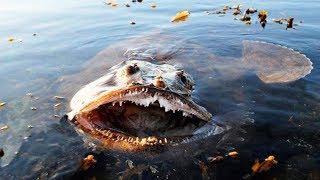 10 MOST DANGEROUS OCEAN CREATURES IN THE WORLD