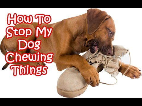 How To Stop My Dog Chewing Things