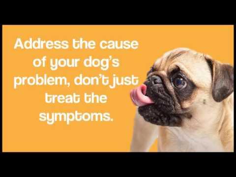 how to stop dog barking | expert dog training