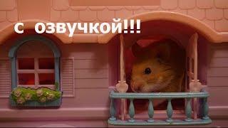 Download Говорящий хомяк в гостях у #Василины и Сони. Очень #смешное видео для детей и взрослых. Video