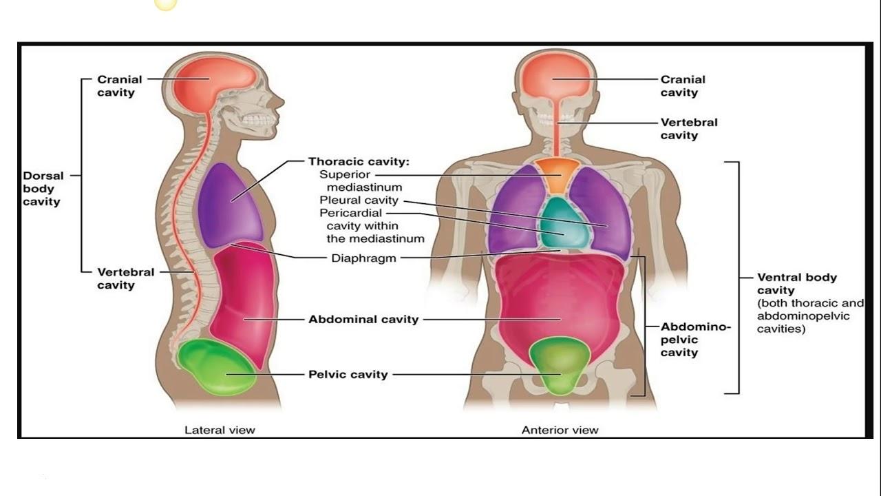 Basic Anatomical Terminology
