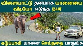 விளையாட்டு தனமாக வீடியோ எடுத்த நபர்!  கடுப்பாகி யானை செய்ததை பாருங்க Tamil News | Latest
