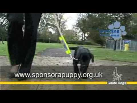 Guide Dogs UK - Sponsor a Puppy Christmas Appeal 2009