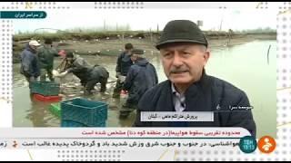 Iran Fish farming, Choubeh village, Soume-Sara county پرورش ماهي روستاي چوبه صومعه سرا ايران