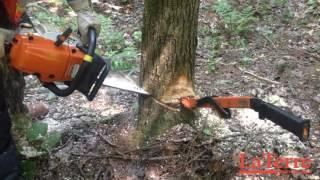 Abattre un arbre en le dirigeant dans le sens contraire de son inclinaison naturelle