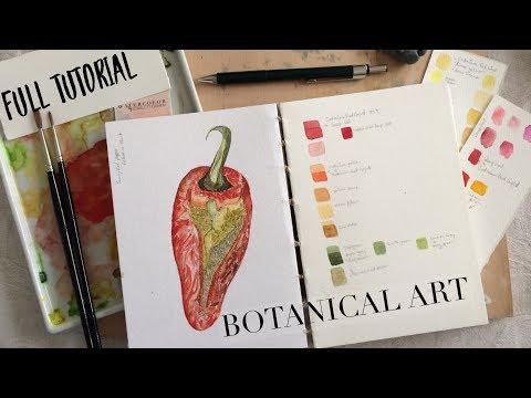 Full Length Botanical Art Tutorial: Pepper WATERCOLOUR by Scarlett Damen