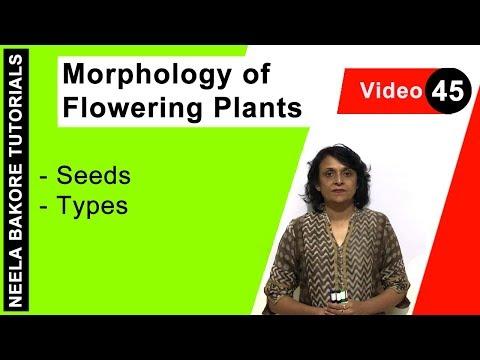 Morphology of Flowering Plants - Seeds - Types