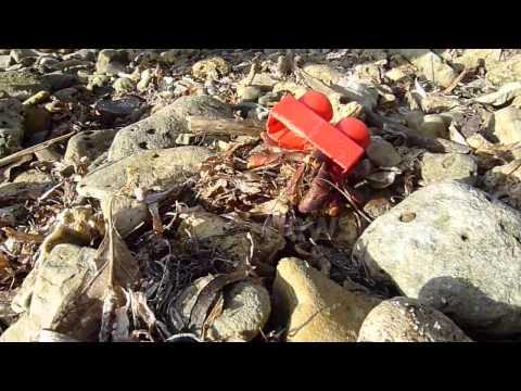Hermit crab borrows lego block as shell