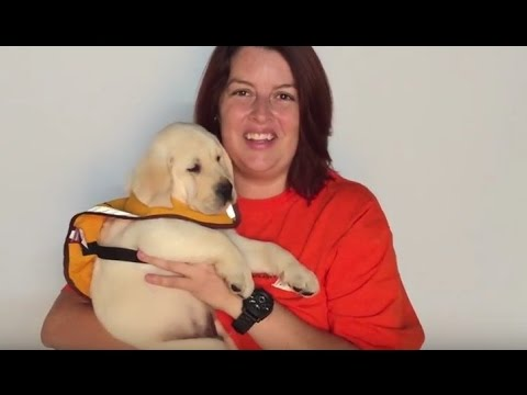 Sponsor a Guide Dog Puppy at the HBF Run for a Reason!