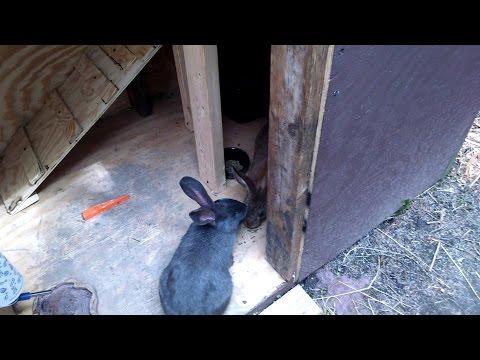DIY Bunny Hutch