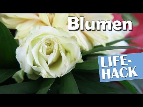 Blumen länger haltbar machen - Lifehack | Anleitung