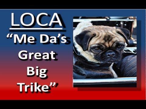 Loca the pug sings again................