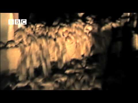 MOUSE MADNESS!  -  biggest mice swarms ever seen,