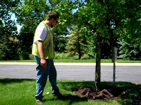 The Lawn Ranger, how to install tree mulch rings, part 2