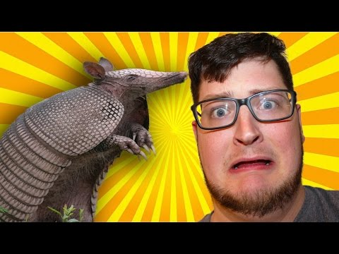 Attack of the Giant Armadillo!