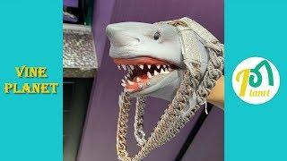 Best Shark Puppet Funny Instagram Videos 2019 - Vine Planet✔
