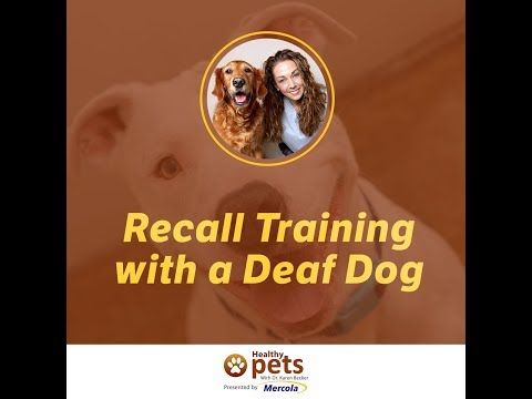Recall Training with a Deaf Dog