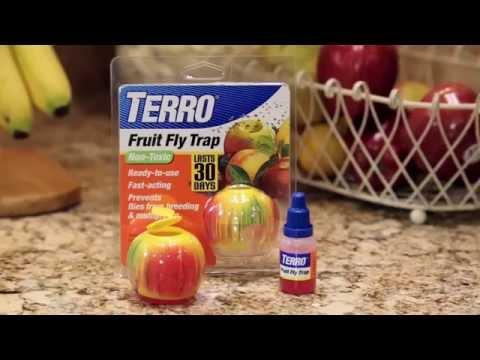 TERRO Fruit Fly Trap Kills Fruit Flies (not fungus gnats!)