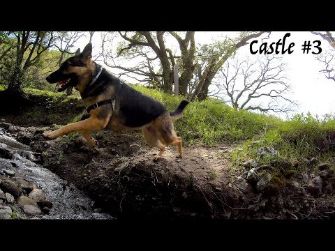 Castle Rock #3 Hiking with German Shepherd Hiking with a Dog 3 of 4