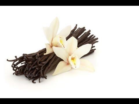Make Vanilla Powder for Holiday Baking!  The Holidays are Coming!