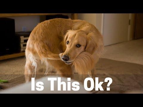 Normal Dog Behavior Or Cause For Concern? 4 Dog Behaviors Explained!