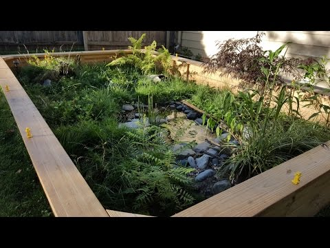 Outdoor Box Turtle Enclosure & Channel Update