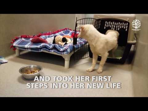 Rescue dog takes first steps into new life